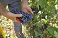 uva vino valpolicella Verona